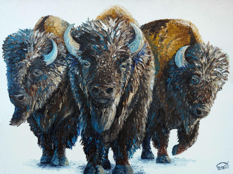PRINT: Bachelor Bulls