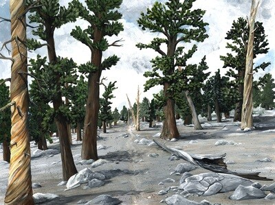 PRINT: A Stony Forest