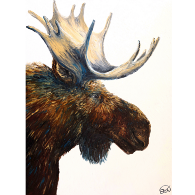 """Available through ART FOCUS Gallery: Portrait of a Bull Moose (30""""x40"""")"""