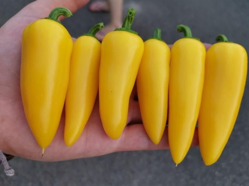 Numex Lemon Spicy Giant