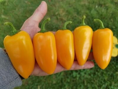 Numex Orange Spicy Giant