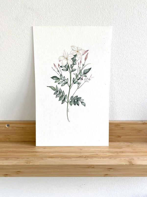 Delicate Jasmine