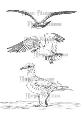 Bird Seagull Combo - Digital Stamp