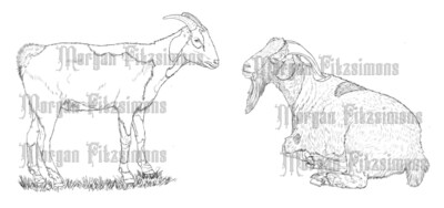 Farm Goats - Digital Stamp