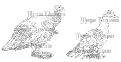 Farm Turkey And Goose - Digital Stamp