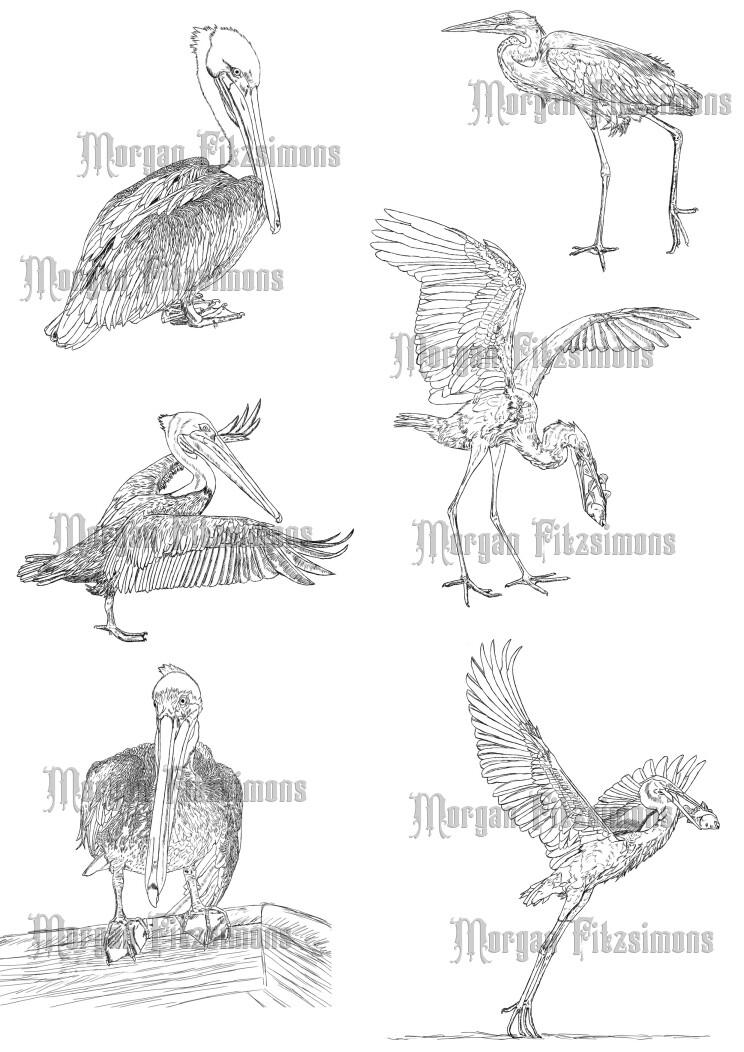 Bird Heron Pelican Combo - Digital Stamp