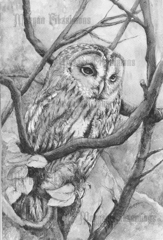 Owl Greyscale - Digital Stamp