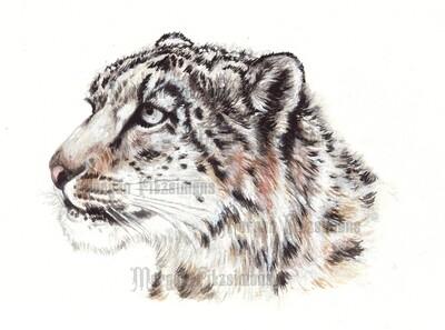 Jaguar In Snow Pre-Coloured - Digital Stamps