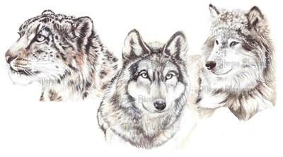 Animal Set 1 Pre-Coloured - Digital Stamps