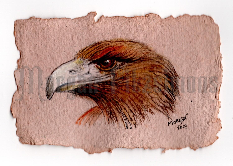 Go Wild Collection: Golden Eagle