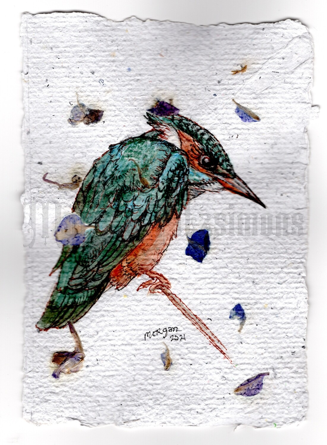 Go Wild Collection: Kingfisher