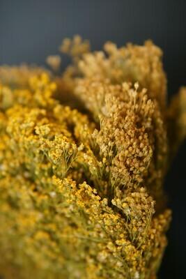 Broom Bloom | natur