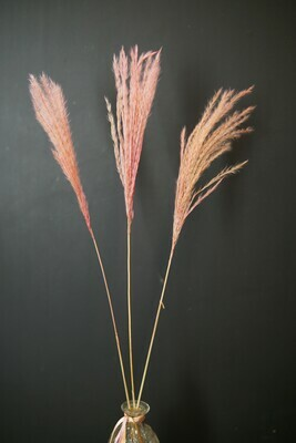 Miscanthus | dusty rosa