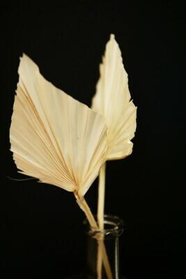 Palm Speer | Weiß