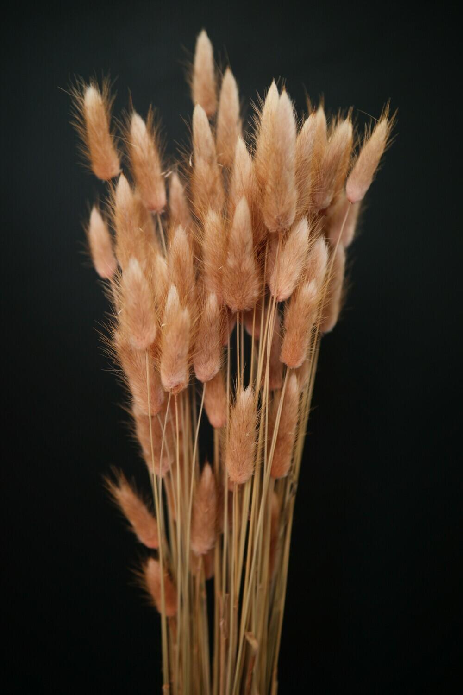 Trockenblumen | Lagurus | Dusty Rose