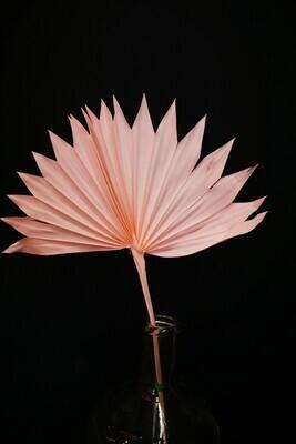 Palm Fächer | Rosa