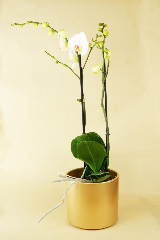 Orchidee | Bijoux Pearl