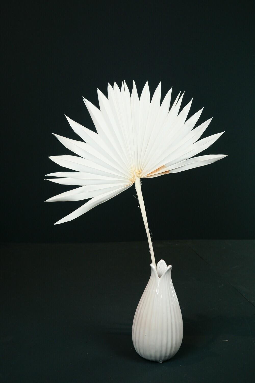 Palm Fächer | Weiß