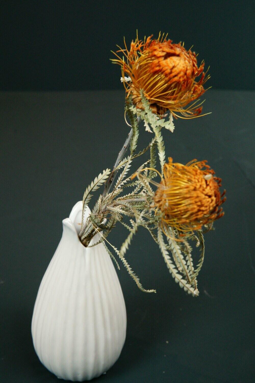 Protea | Dusty-Orange