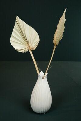 Palm Speer | Natur