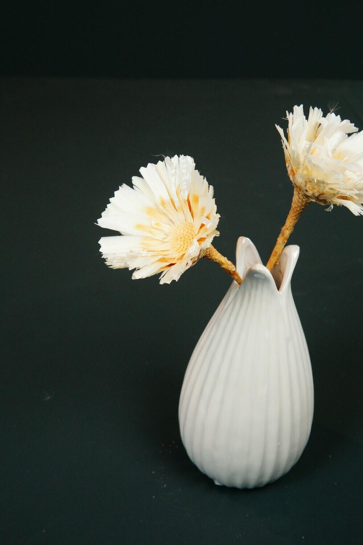 Protea | Hailey