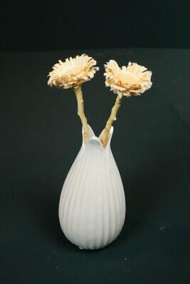 Tailey | Protea