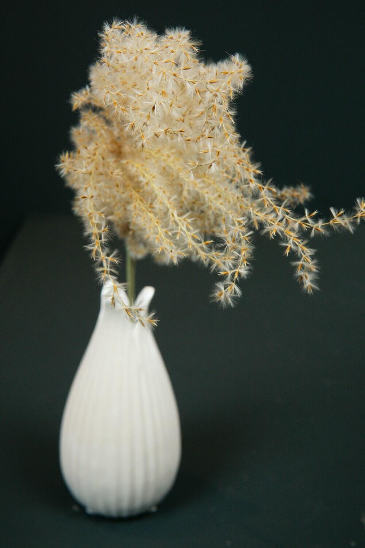 Miscanthus   Natur