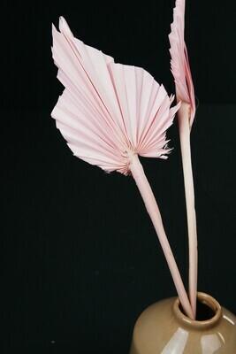 Palm Speer | Rosa