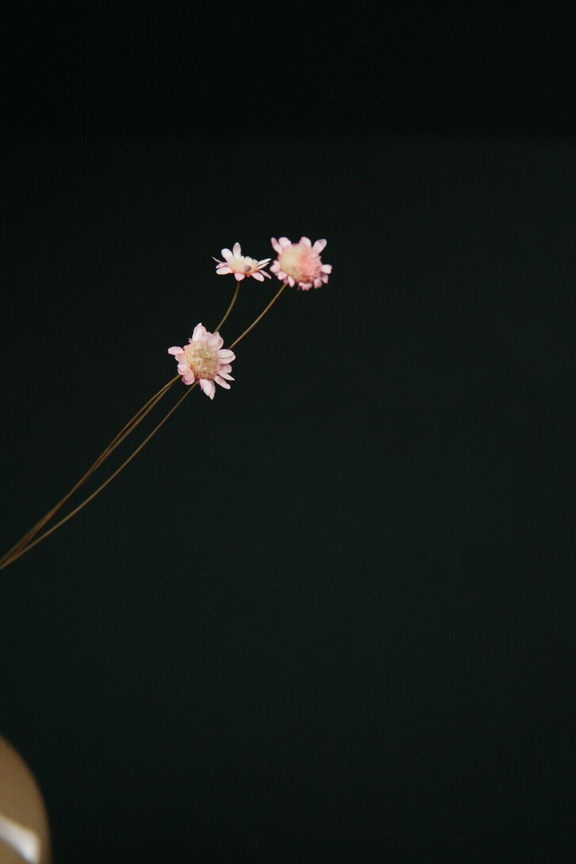 Glixia | Rosa | 1/2 Bund