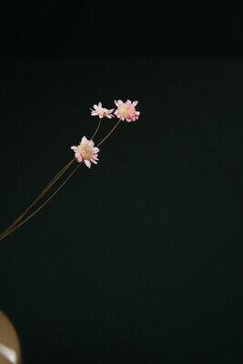 Glixia | Rosa