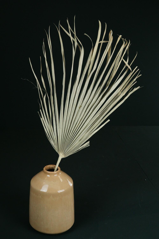 Palm Blatt | Natur