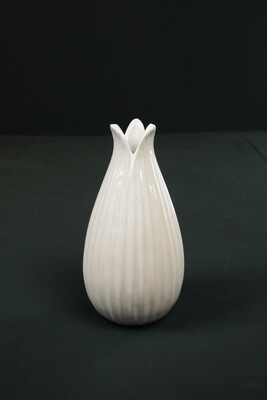Vase   Weiß   Tulpe