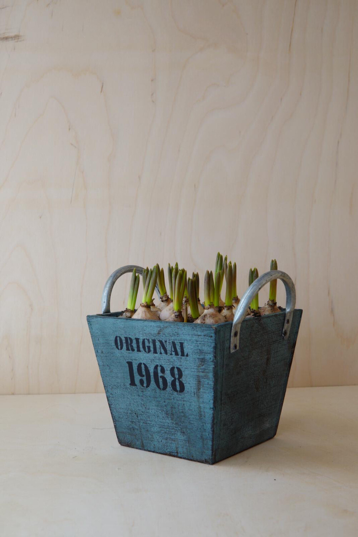 Traubenhyazinthe   Original Kiste Blau