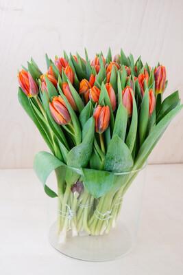 Tulpe | Prinzessin Irene | Orange