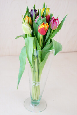 Tulpe | Mix | Gefüllt