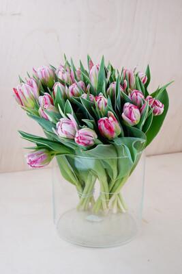 Tulpe | Flash Point | Rosa Gefüllt