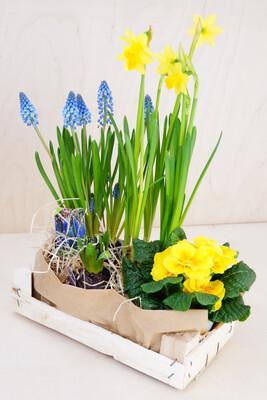 Frühling in a Box | Petite