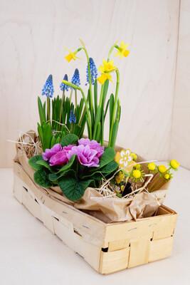 Frühling in a Box | Medium