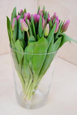 Tulpe | 30 Stiele | Rosa