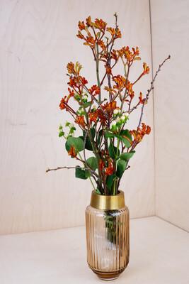 Känguru-Blume & Hypericum