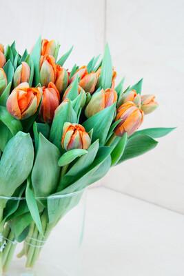 Tulpe | Orange Princess | Orange Gefüllt