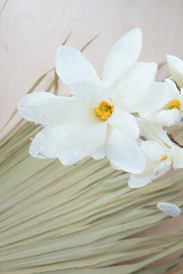 Magnolie | Weiß