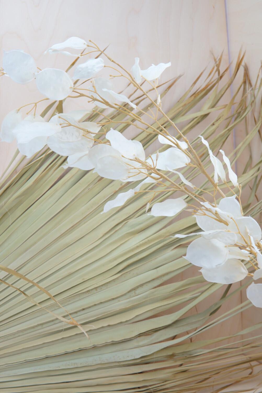Lunaria | Weiß