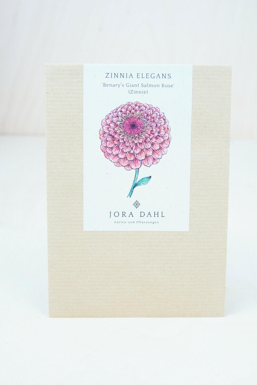 Zinie '...Salmon Rose'   Blumensamen