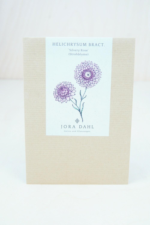 Strohblume 'Silvery Rose' | Blumensamen