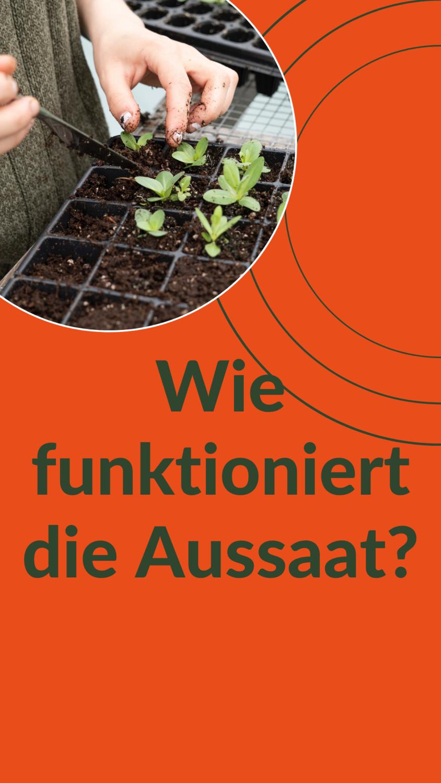 How-To: Aussaat
