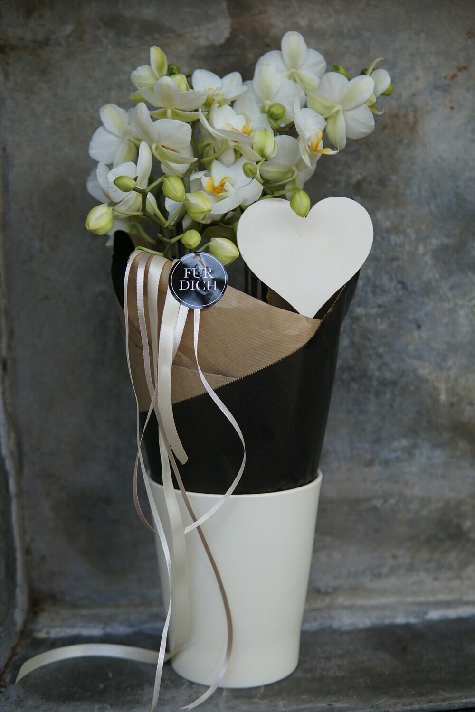 Orchidee   Für Dich