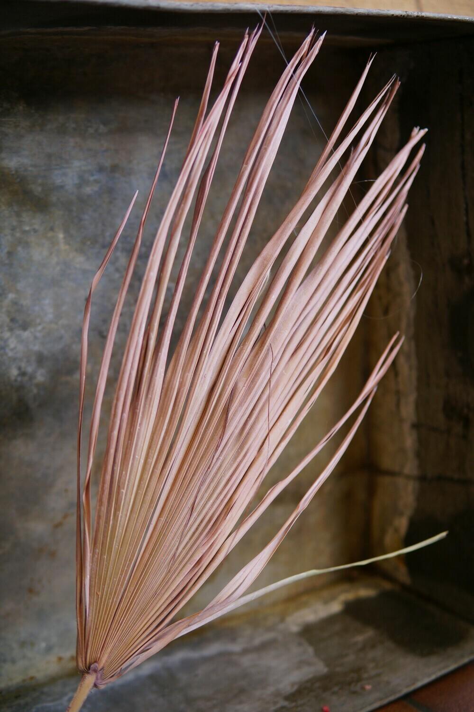 Palm Blatt | Dusty