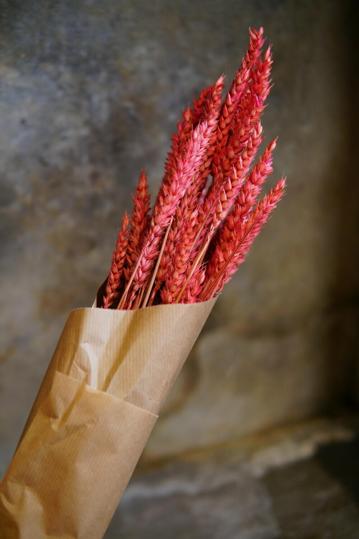 Weizen | Rot