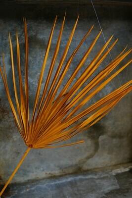 Palm Blatt   Orange